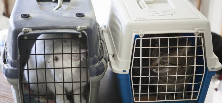 Nur jede 2. Katze wird regelmäßig tierärztlich versorgt!