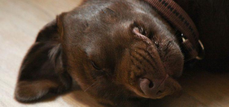 So schützen Sie Ihr Haustier gegen Würmer