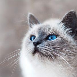 Nicht nur eine Katzenwäsche