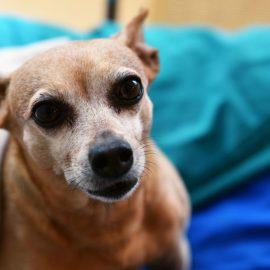 Sachkunde: Pflicht für alle Tierhalter