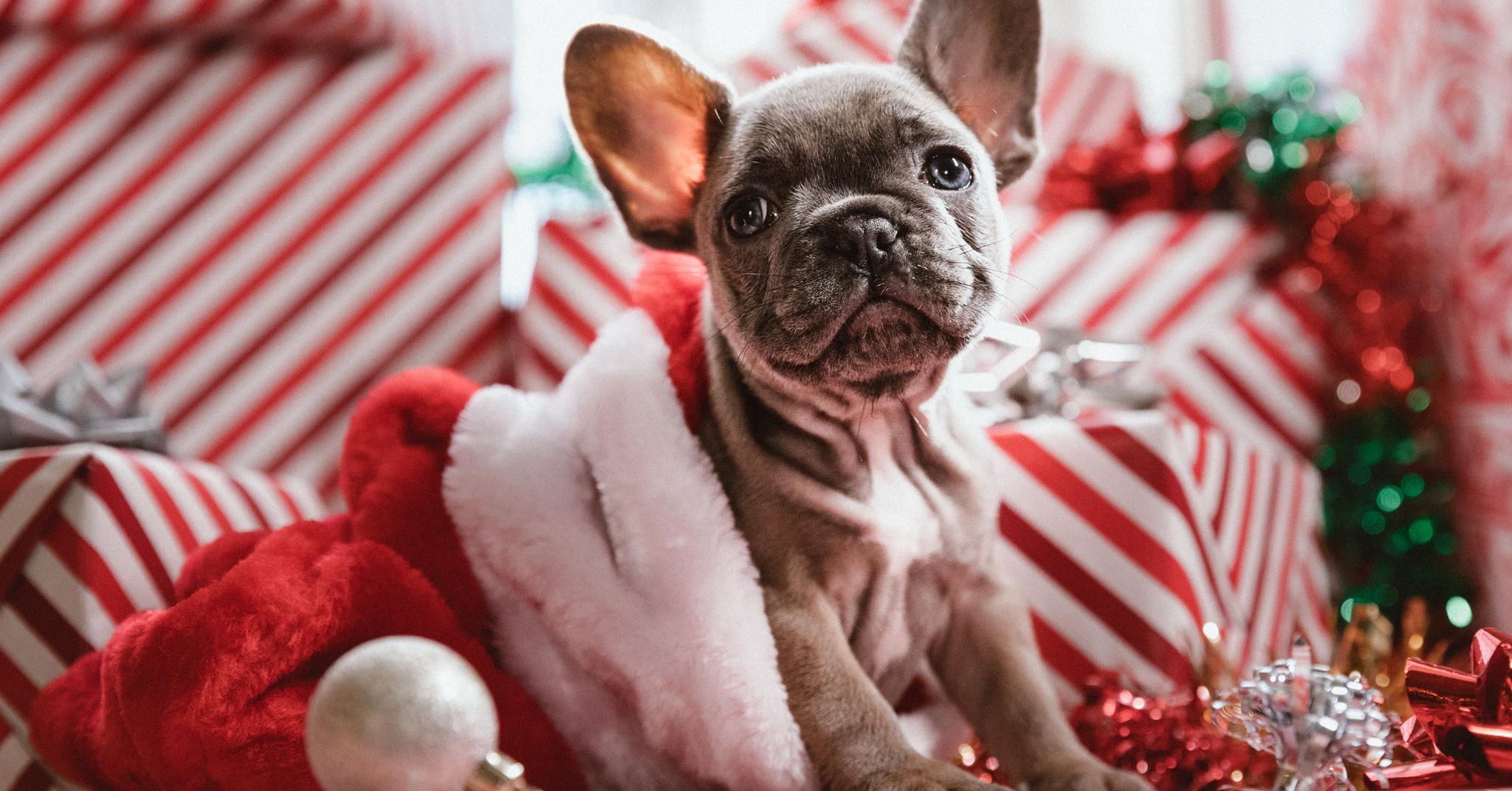 Tierarst Wiesentheid Frohe Weihnachten