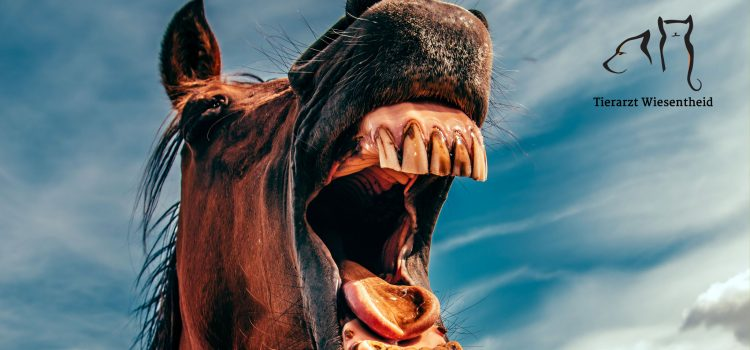 Pferd zeigt Zähne