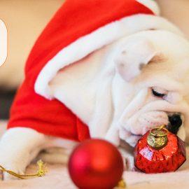 Wir wünschen ein frohes Weihnachtsfest & ein gutes neues Jahr!