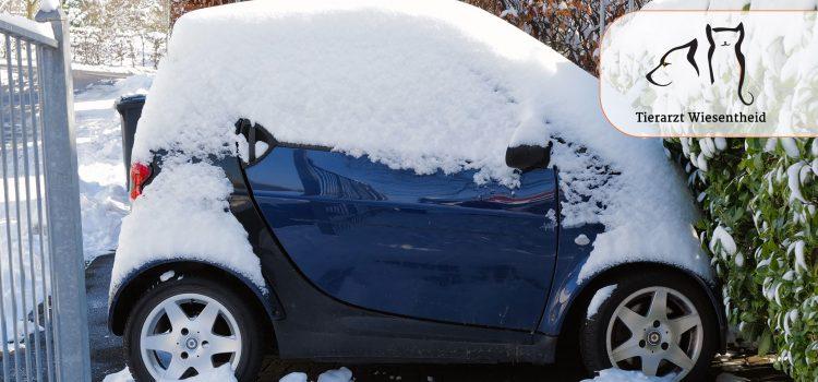 Eisige Kälte, dicke Schneedecke: Alles fest im Griff?