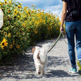 Mit Hund Gassi gehen